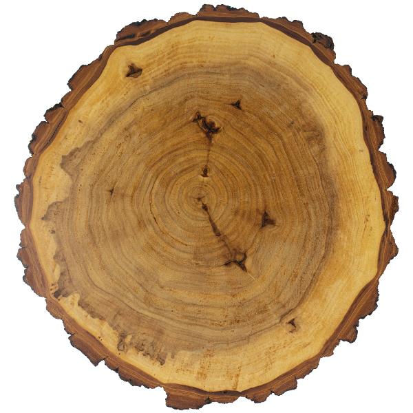 Wooden Poplar Cut